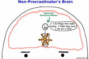 1NP Brain