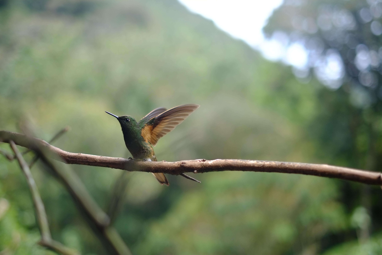 L'entrepreneur colibri
