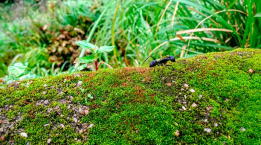 Biomimétisme: le progrès par la nature