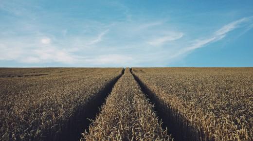 Quand l'agriculture intensive se fera uberiser